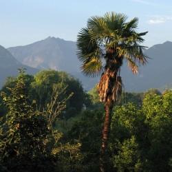 Tropique béarnaise - Coarraze · © stockli