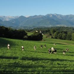 Pastorale sur le vallon de Candau - Coarraze · © stockli