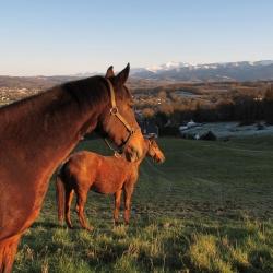 Les chevaux de Langadure - Nay · © stockli