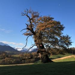 L'arbre remarquable de Lys · © stockli