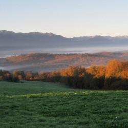 Bois de Carrasquet et de Sargaillouse - Saint Vincent · © stockli