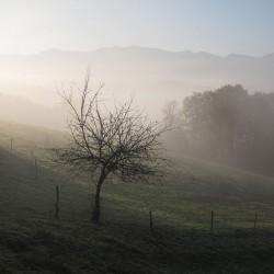 L'arbre de Cabarrec - Haut de Bosdarros · © stockli