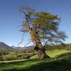 L'arbre magnifique - Lys · © stockli